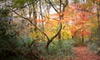 Chattanooga Audubon Society - Concord Audobon: $17 for a One-Year Family Membership to the Chattanooga Audubon Society ($35 Value)