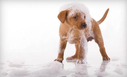 Cibolo Creek Veterinary Hospital: 1 Night of Pet Boarding in a Standard Run - Cibolo Creek Veterinary Hospital in Boerne