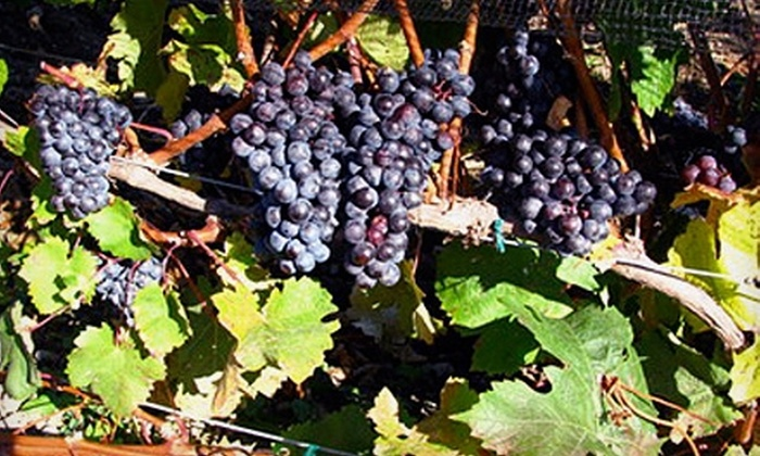 Crescent Wines - Douglas: $70 for a Winemaking Experience at Crescent Wines (Up to $145 Value)