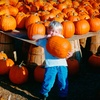 $5 for Corn Maze and Hayride Tickets for Four