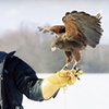 New England Falconry - Hadley: Falconry Experience at New England Falconry in Hadley