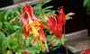 Irvine Nature Center – Up to 56% Off Family Membership & Plants in Owings Mills