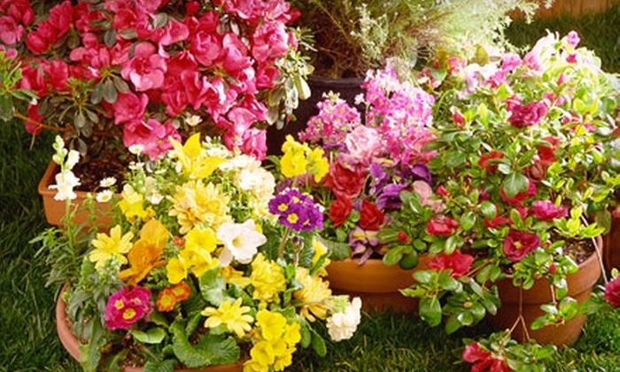 Rolling Meadows Garden Center - Olathe: $35 for $70 Worth of Plants, Garden Tools, and Landscaping Supplies at Rolling Meadows Garden Center in Olathe