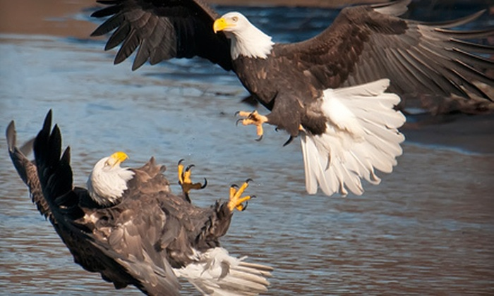 Aaron's Photo Tours - Factoria: $99 for a Four-Hour Seattle Nature and Wildlife Photography Workshop from Aaron's Photo Tours ($199 Value)