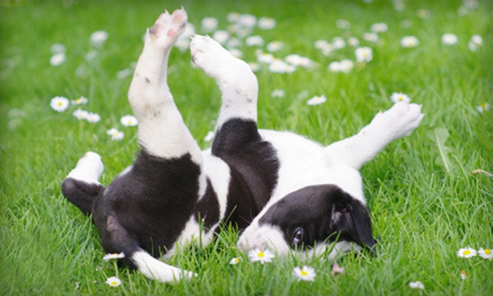 Yogadog Dog Training - Multiple Locations: $65 for Six One-Hour Dog-Training Classes at Yogadog Dog Training ($150 Value). Three Class Styles Available.