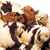 Plaza Santa Ana: helado italiano artesanal