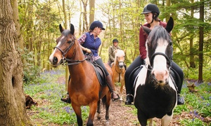 Cae Hic Livery & Riding Centre: One-Hour Riding Lesson For One (£14) or Two (£27) at Cae Hic Livery & Riding Centre (Up to 45% Off)
