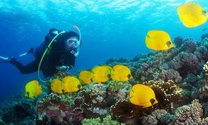 DiveAdventures: Volledige PADI Open Water of Scuba Diver-duikopleiding bij DIVEadventures