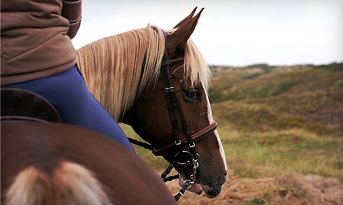 Wolfshohl Horse Training - 6: One-Hour Horseback Trail Ride for One, Two, or Four from Wolfshohl Horse Training (Up to 62% Off)