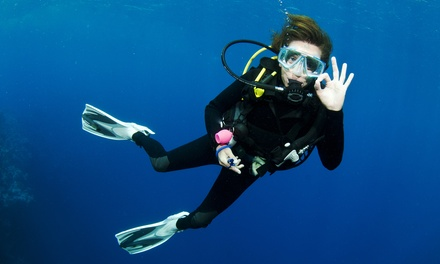 $149 for an Angelfish Semiprivate Open-Water Certification Package at Academy of Scuba (Up to $299 Value)