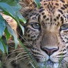 50% Off Admission to Great Cats World Park