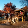58% Off Visit to Candlelight Holiday Festival