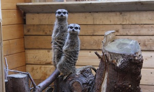 Hemsley Conservation Centre: Hemsley Conservation Centre: Entry with Refreshments for a Child, Adult or a Family of Four (Up to 23% Off)
