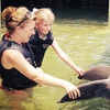 39% Off for Dolphin Encounter at Dolphin Cove