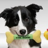 $4.99 for a SPOT Dog Toy