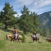 Up to 43% Off Horseback Trail Ride