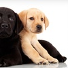 Up to 53% Off Dog Care at Camp Canine