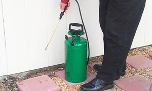 Off the Wall Pest Services: $21 for an Exterior Home Pest-Control Treatment from Off the Wall Pest Services ($80 Value)