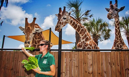 One Year Zoo Membership Naples Zoo At Caribbean Gardens Groupon