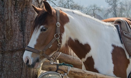 $40 for $85 Worth of Horseback Riding — Spoon Blue Stables
