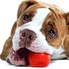 50% Off Canine Massage