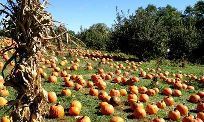 Apple Ridge Orchards - Warwick: Pumpkin Picking, Hayrides, Cider, and Donuts for Two, Four, or Six at Apple Ridge Orchards (Up to 52% Off)