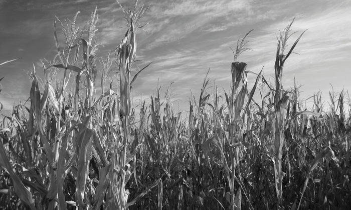 Lainway Corn Maze - Zombie Paintball: Up to 45% Off Zombie Paintball and Corn Maze at Lainway Corn Maze