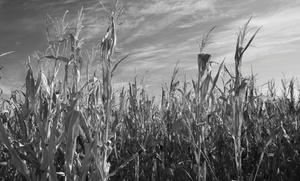 Lainway Corn Maze: Up to 45% Off Zombie Paintball and Corn Maze at Lainway Corn Maze