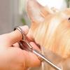 46% Off Pet Grooming
