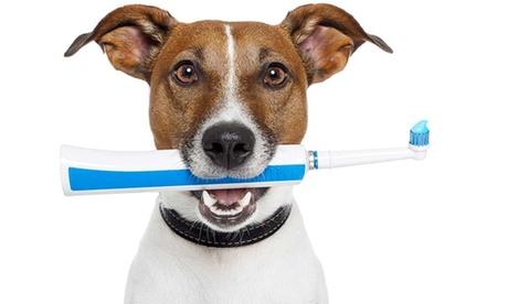 Limpieza bucal para mascota por 49,95 € o esterilización de perro o gato por 59,95 € Oferta en Groupon