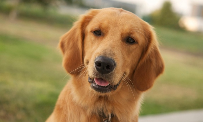 Lakeside Dog Grooming - Sterling Heights: Five Days of Doggy Daycare at Lakeside Dog Grooming (39% Off)