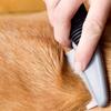 47% Off Pet - Grooming / Salon