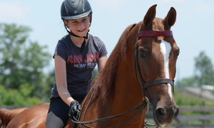Vantage Point Farm: One or Two Private 30-Minute Horseback-Riding Lessons with Horse Care Session at Vantage Point Farm ($67 Off)