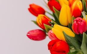 Les Fleurs de Nicolas: Fêtes de Pâques : Bouquet carnaval de 20 ou 40 tulipes dès 14,90 € avec Les Fleurs de Nicolas