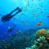 Bautismo de buceo en el mar de Tarifa