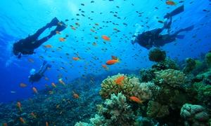 Cies-Sub: Bautismo de buceo en mar de Tarifa para una o dos personas desde 29,95 € en La Garita