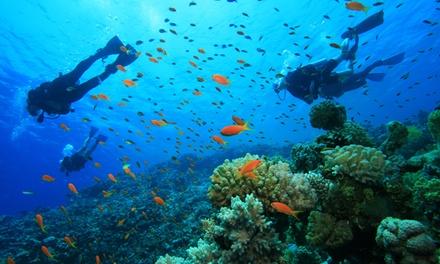 Bautismo de buceo en mar de Tarifa para una o dos personas desde 29,95 € en La Garita