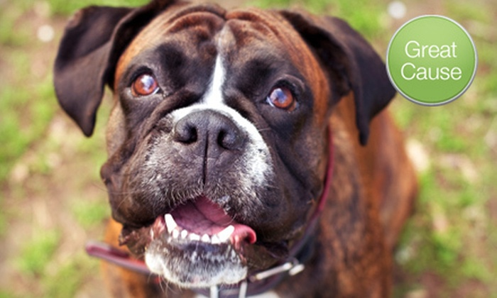 Coastal Boxer Rescue of Florida - Palm Beach: $10 Donation to Rescue Dogs