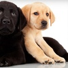 Up to 64% Off Grooming at Pampered Paws Pet Salon