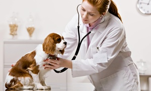 Blue Spruce Animal Clinic: Vet Exam for a Dog, Cat, or Exotic Animal at Blue Spruce Animal Clinic (65% Off)