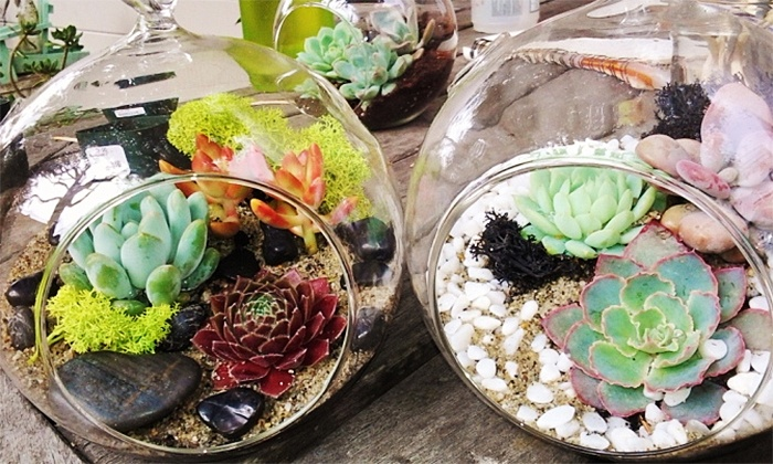 Terrarium Making Class with Succulents - Matter of Trust: Make Your Own Terrarium with Robust Succulent Plants