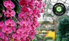 Longwood Gardens - Kennett Square: $9 for a Visit to Longwood Gardens (Up to $18 Value)
