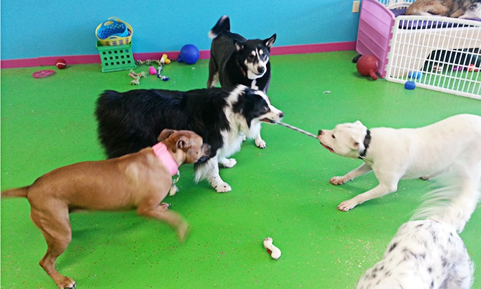 Doggie Daycare Peace Paws Grooming Salon And Doggie Daycare Groupon