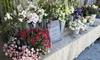 Flower Gypsies - Beach Barber Tract: $33 for $50 Worth of Plants — flower gypsies