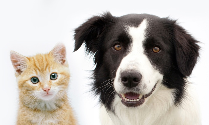 Seven Hills Pet Hospital - Seven Hills: $149 for a Complete Pet Dental Package at Seven Hills Pet Hospital ($399 Value)