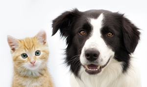 Seven Hills Pet Hospital: $149 for a Complete Pet Dental Package at Seven Hills Pet Hospital ($399 Value)