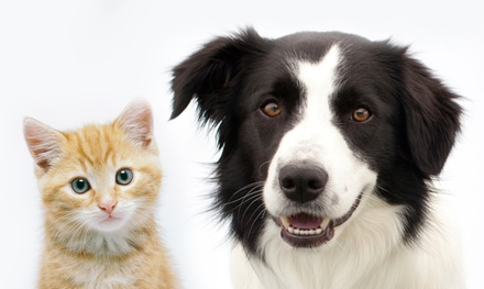 $163 for a Complete Pet Dental Package at Seven Hills Pet Hospital ($299 Value)