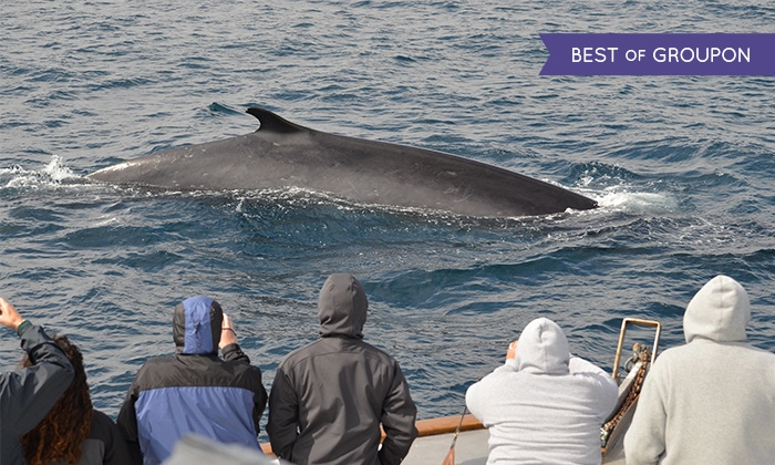 San Diego Whale Watch - San Diego : Three-Hour Whale-Watching Tour for One, Two, or 10 from San Diego Whale Watch (Up to 55% Off)