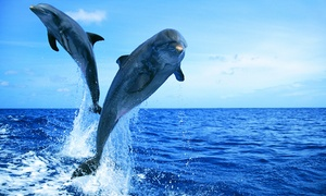 90-Minute Dolphin Safari and Scenic Boat Tour for Two, Four, or Six at Atlantic Water Tours (Up to 56%  Off)