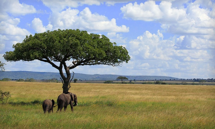 Tanzanian Safari with Airfare - Woodside: Nine-Day Tanzanian Safari from Classic Escapes with Roundtrip Airfare, Hotel Accommodations, and Most Meals